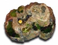 copac bonsai 54853