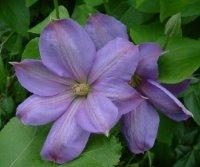 pamant de flori 12795
